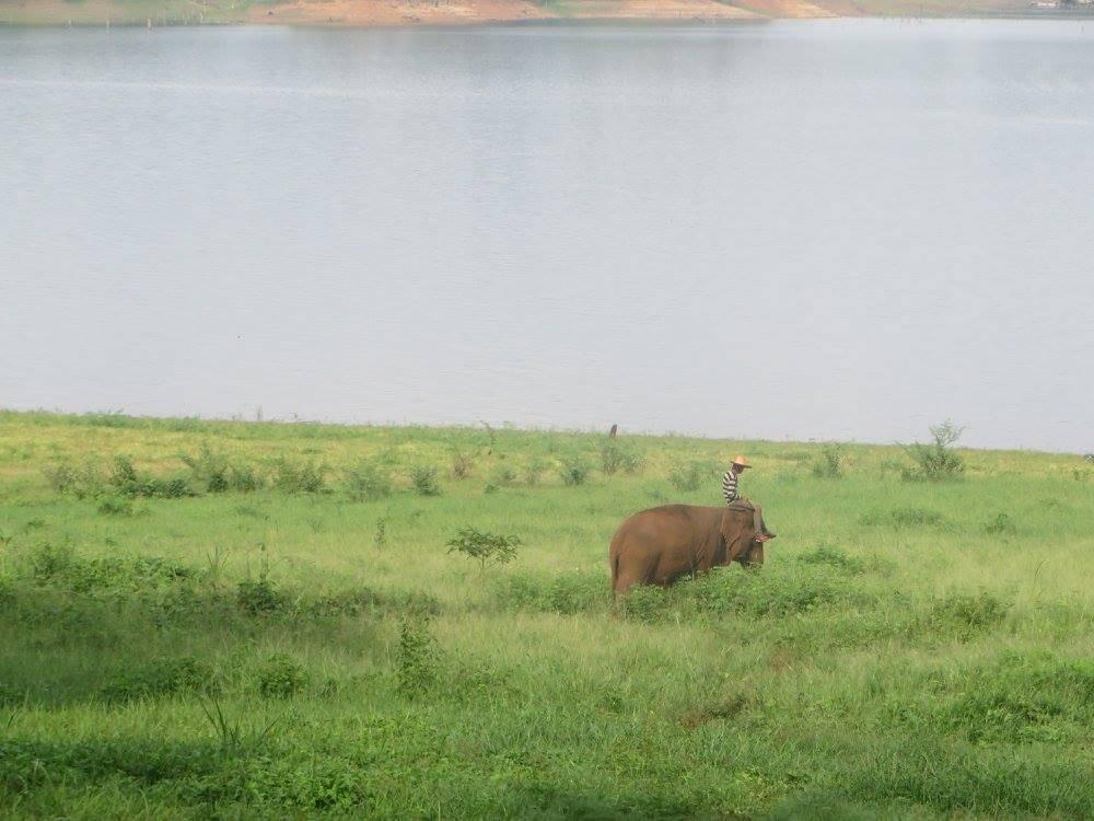 Photo 1: A la découverte des éléphants de façon naturelle