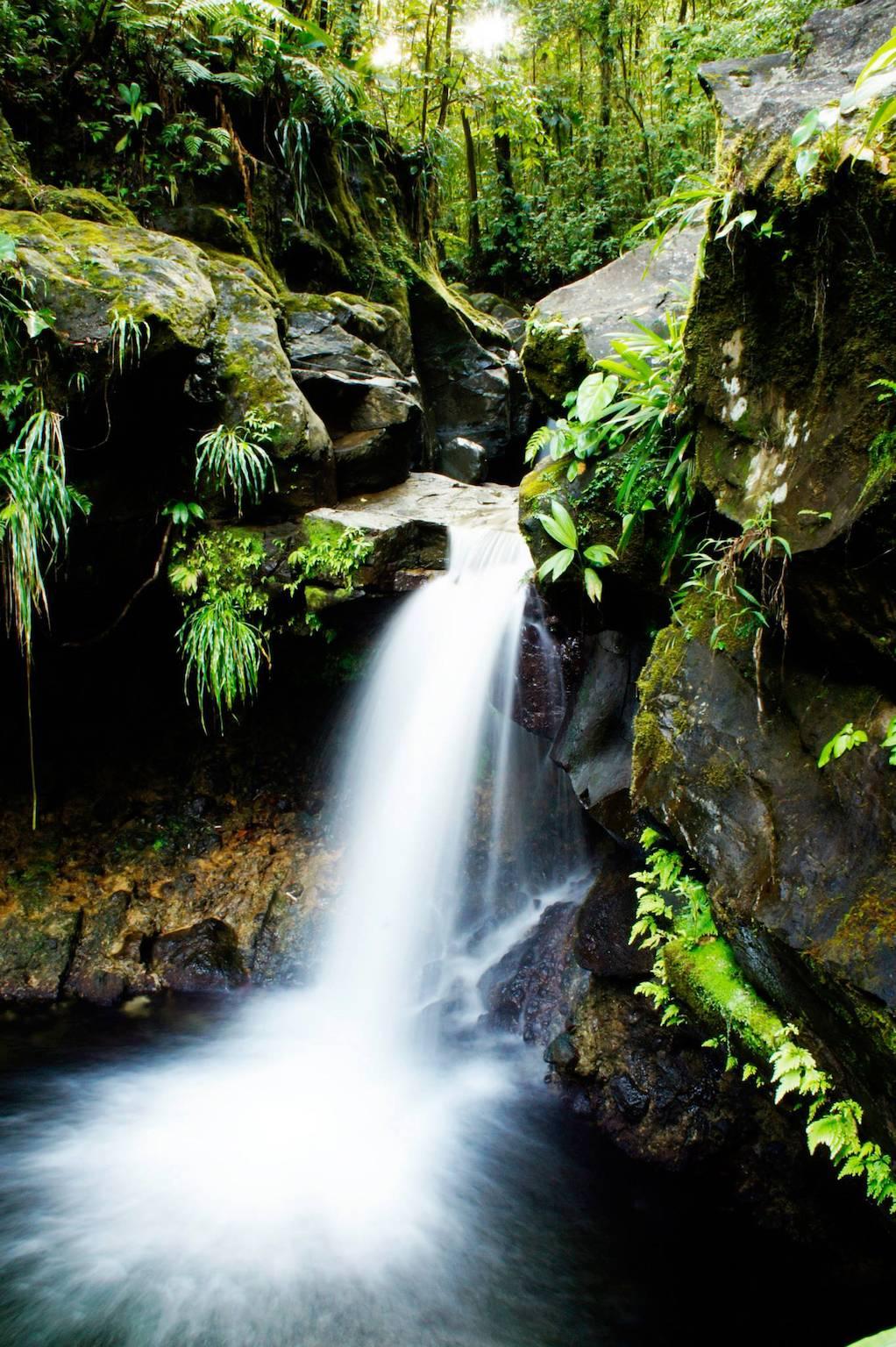 Photo 3: Cascade Paradise