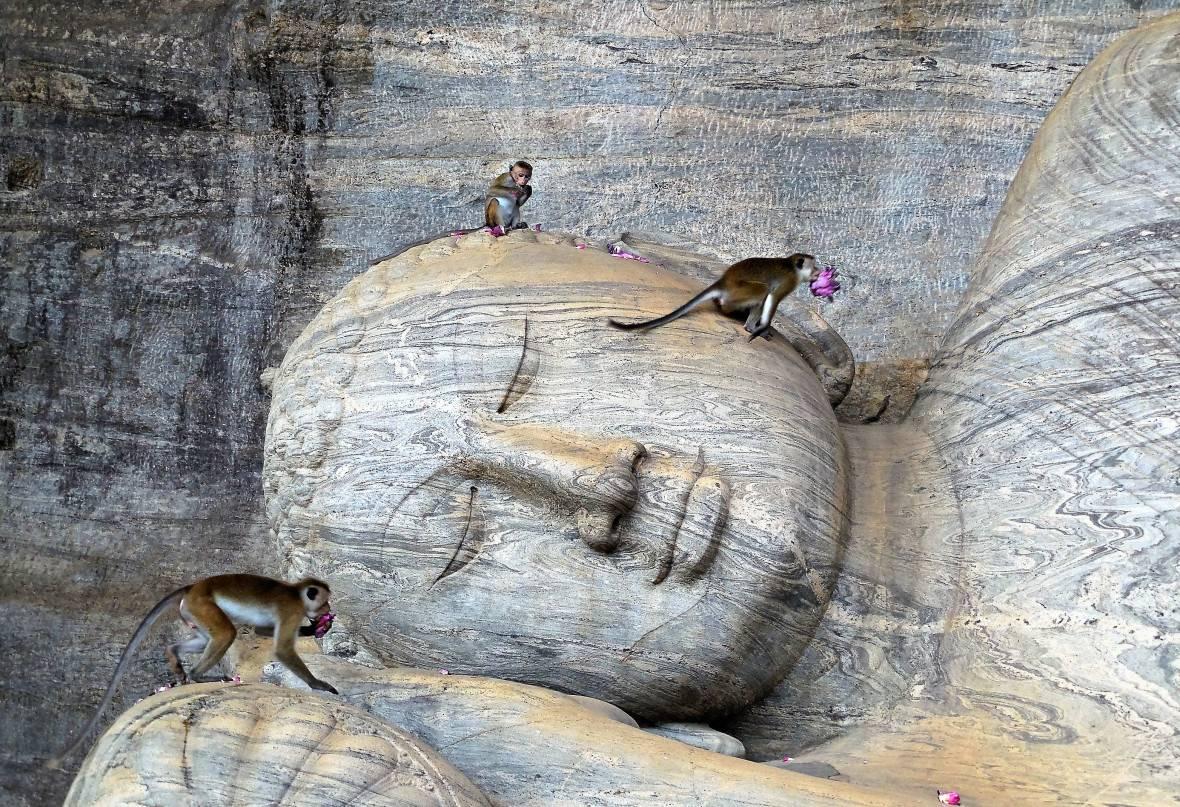 Photo 1: Polonnaruwa - Sri Lanka