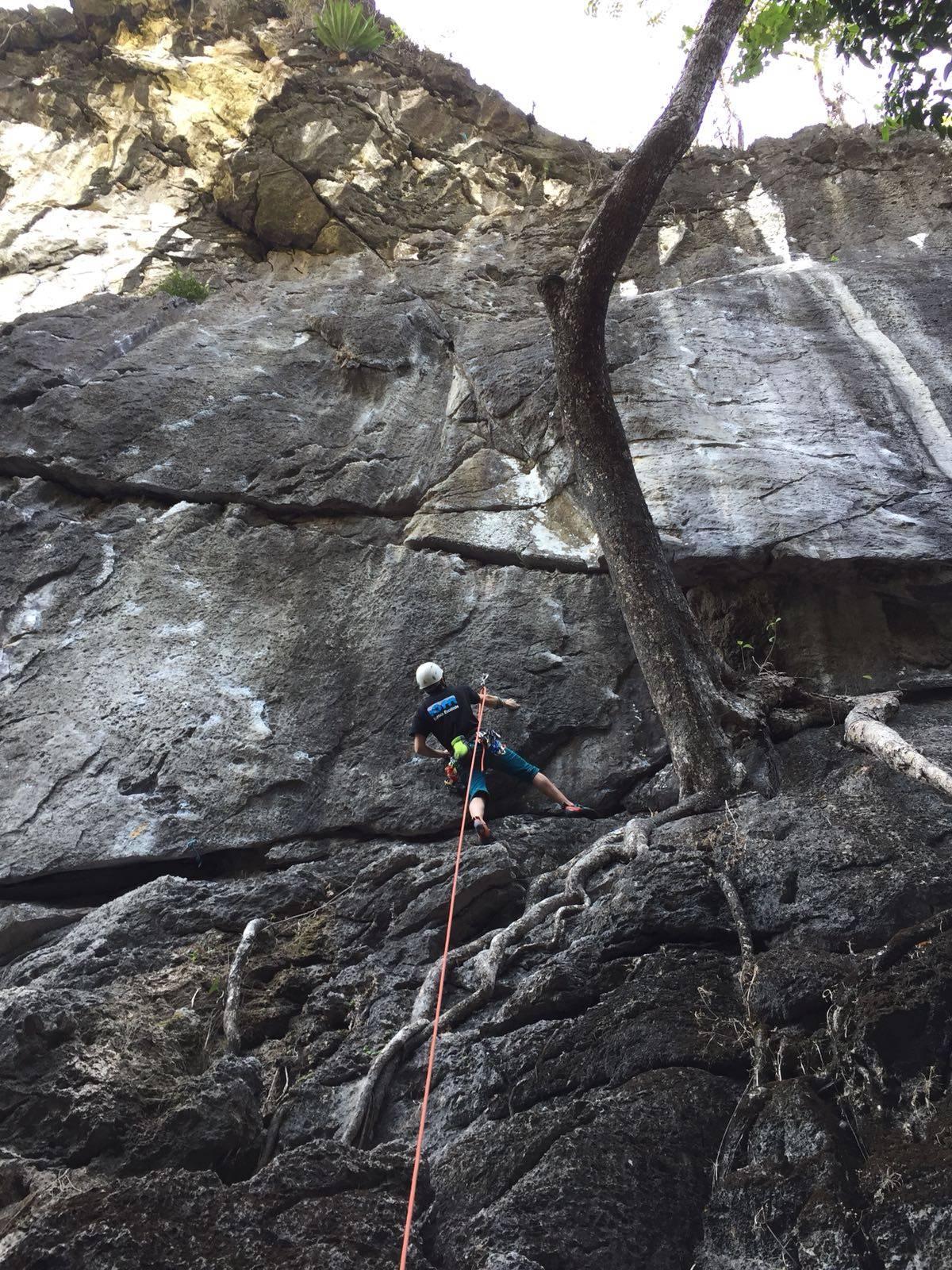 Photo 2: Green Climbers Home