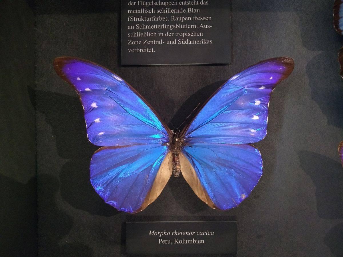 Photo 3: Muséum d'histoire naturelle de Vienne ! Quelle collection !!!