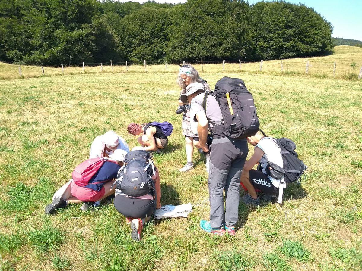 Photo 1: Stage découverte de la cueillette et cuisine des plantes sauvages