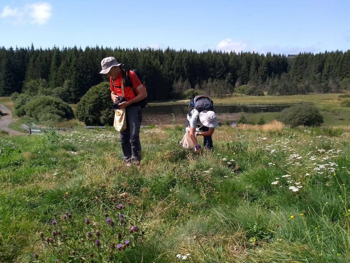 Photo 3: Stage découverte de la cueillette et cuisine des plantes sauvages