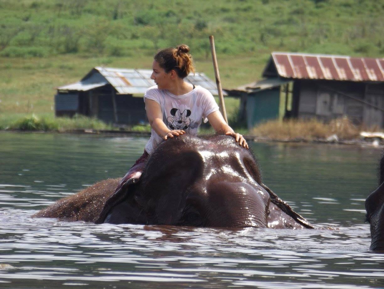 Photo 3: A la découverte des éléphants de façon naturelle