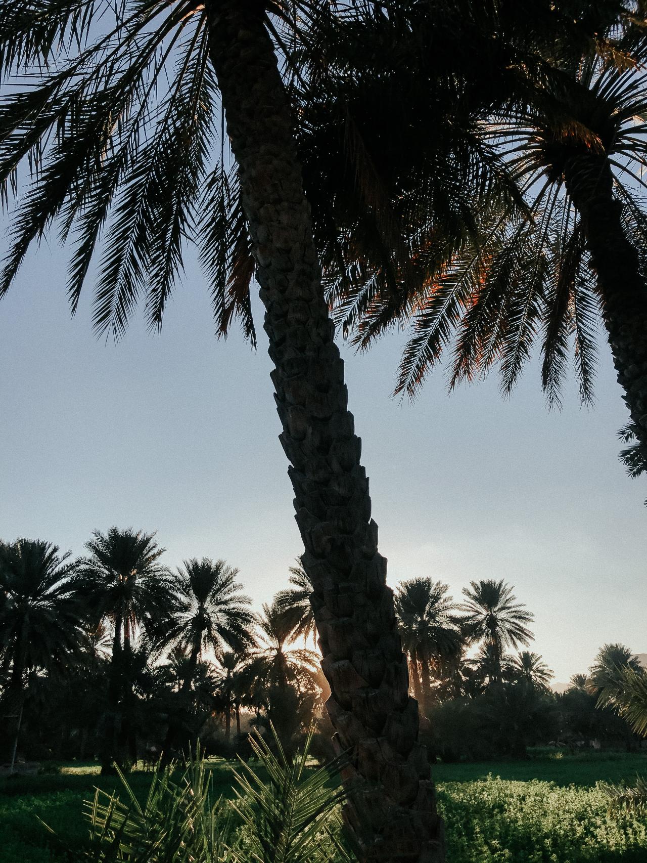 Photo 3: Palmeraie d'Al Hamra
