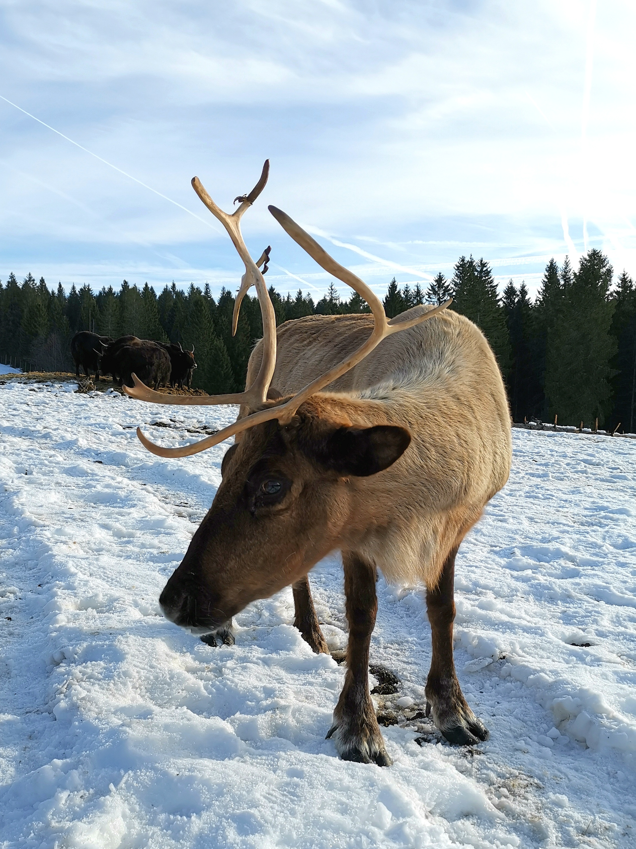Photo 2: Une superbe journée hivernale dans le Haut-Doubs