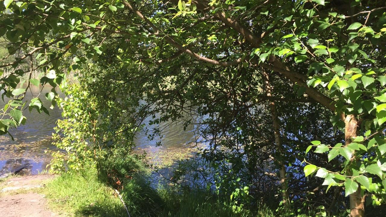 Photo 1: Marais de Mesple