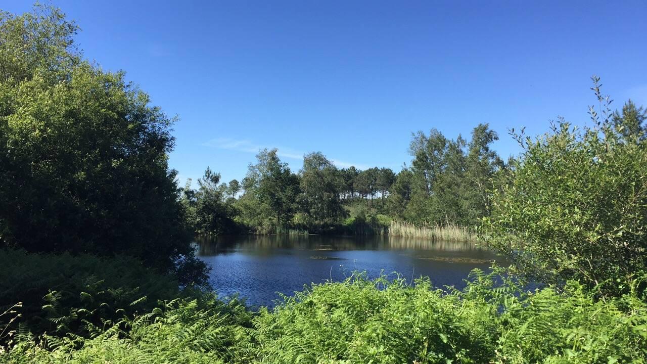 Photo 2: Marais de Mesple