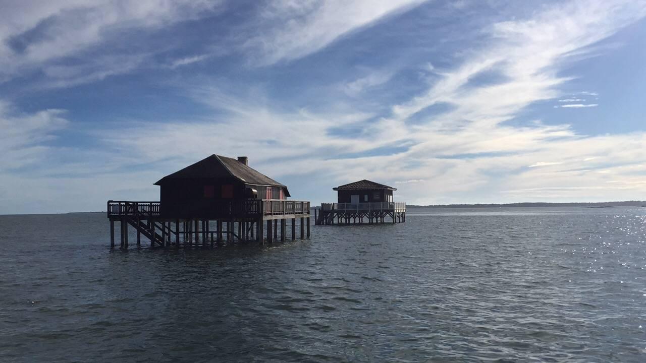 Photo 1: Promenade en catamaran, cap vers l'île aux oiseaux !