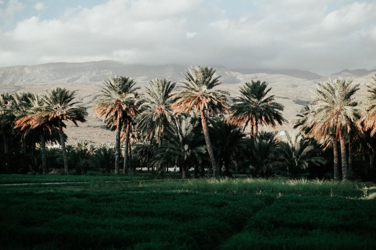 Photo 1: Palmeraie d'Al Hamra