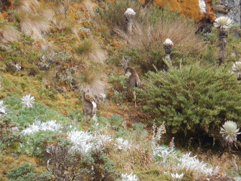 Photo 1: Paramo de Oceta : randonnée dans un eco-système unique au monde