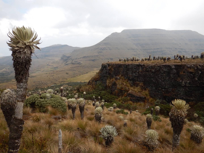 Photo 2: Paramo de Oceta : randonnée dans un eco-système unique au monde
