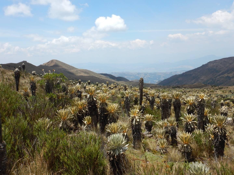 Photo 3: Paramo de Oceta : randonnée dans un eco-système unique au monde