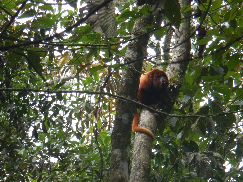 Photo 1: Barbas Bremen, sur la terre des singes hurleurs