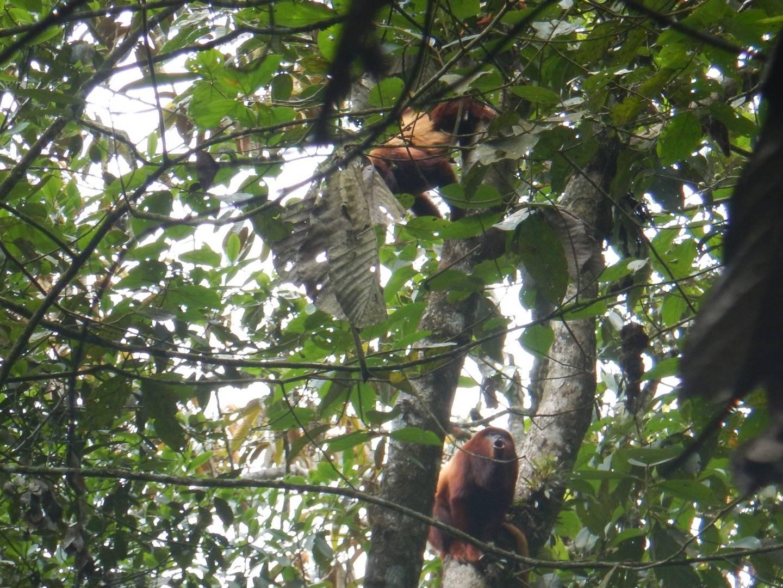 Photo 2: Barbas Bremen, sur la terre des singes hurleurs