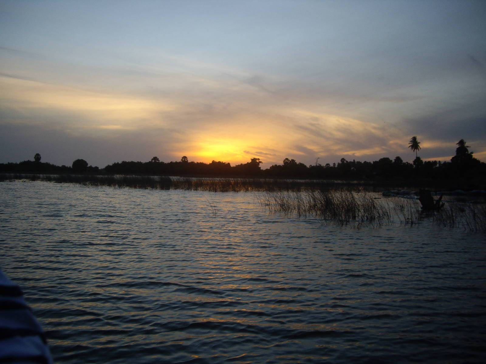 Photo 1: Un ballade dans la Mangrove