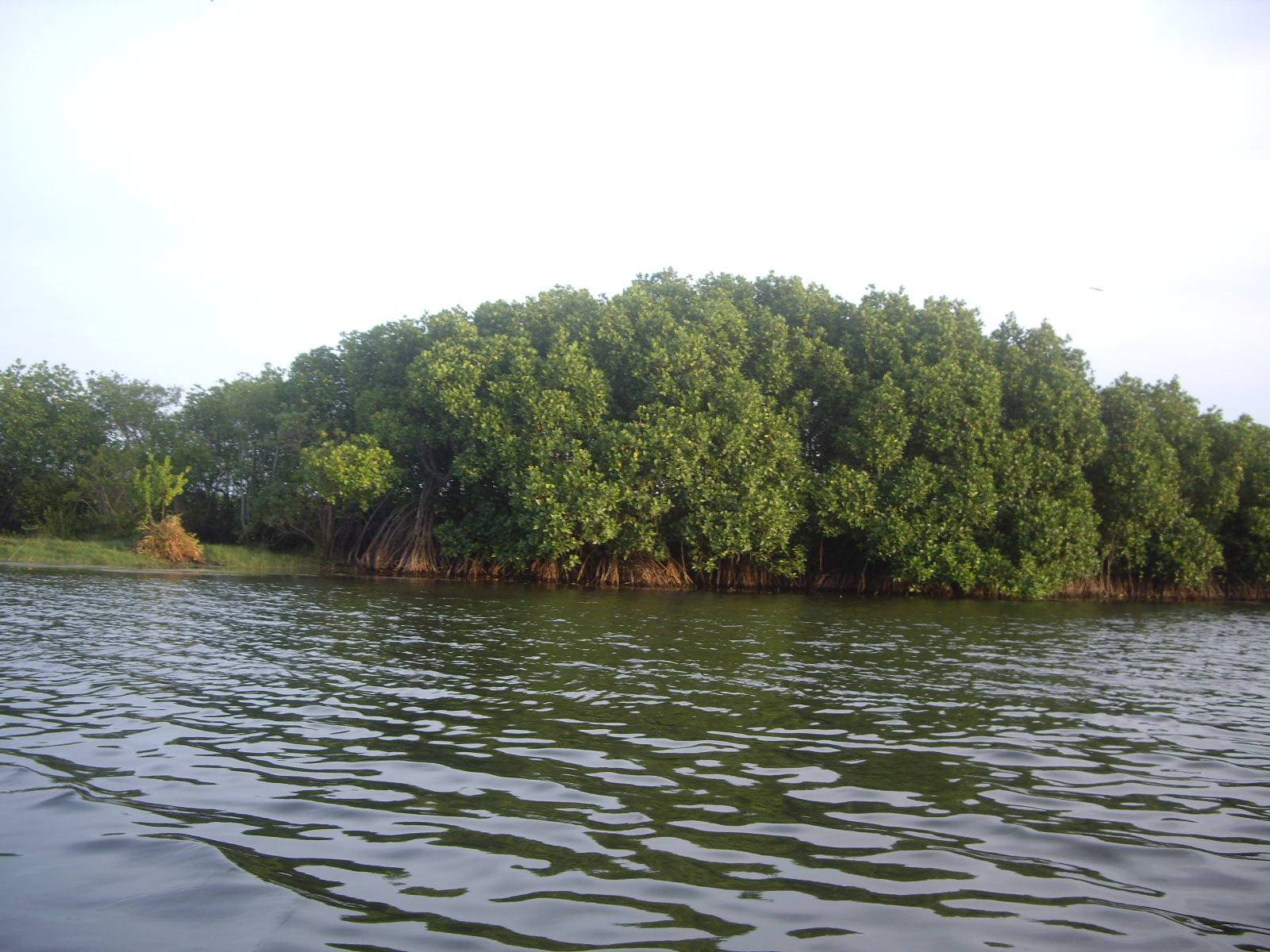 Photo 3: Un ballade dans la Mangrove