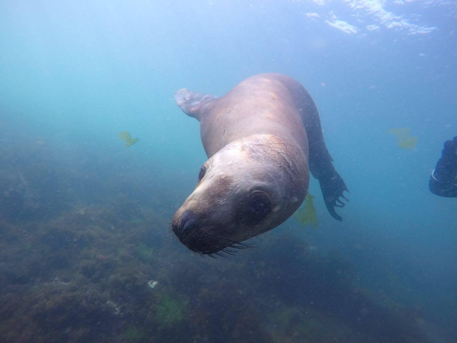 Photo 3: Rencontre avec les lions de mer