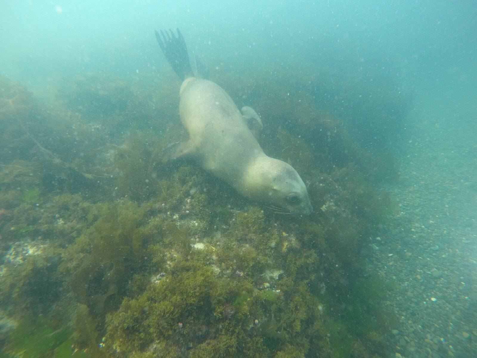 Photo 2: Rencontre avec les lions de mer
