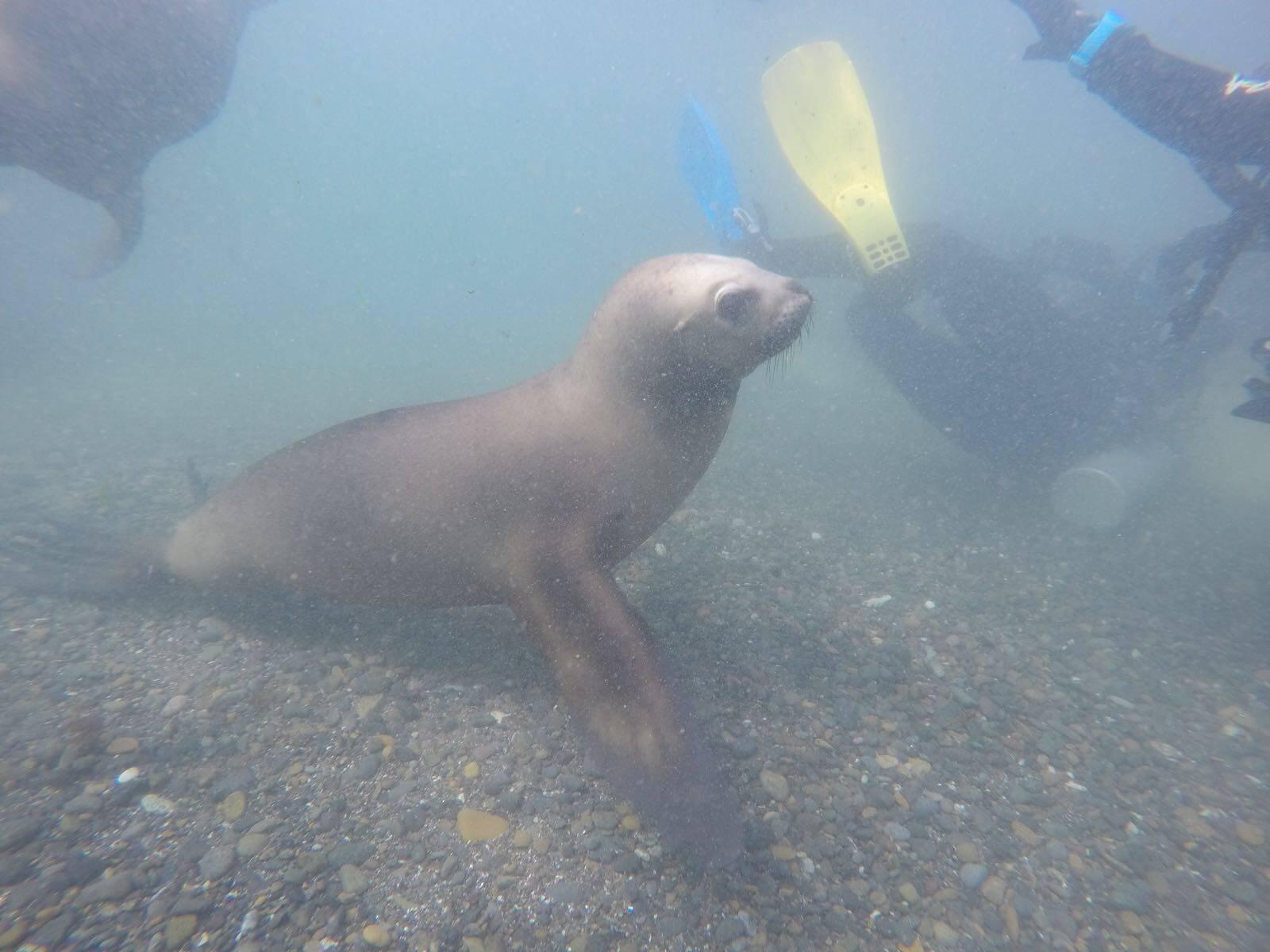 Photo 1: Rencontre avec les lions de mer
