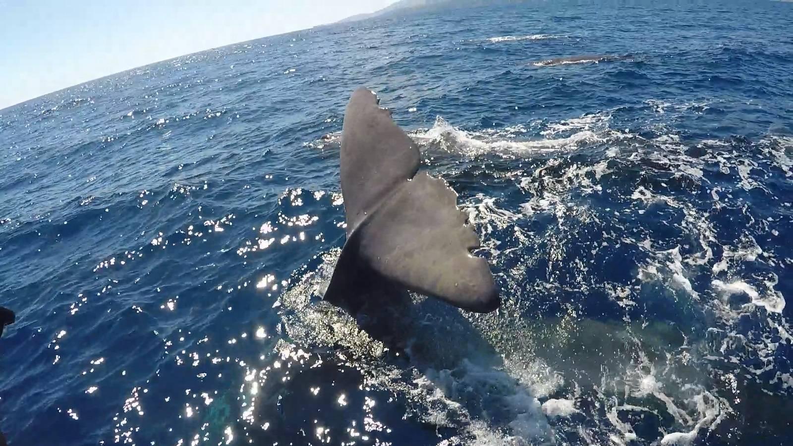 Photo 2: Moby Dick Tours : voir dauphins et baleines de très près sans les gêner !