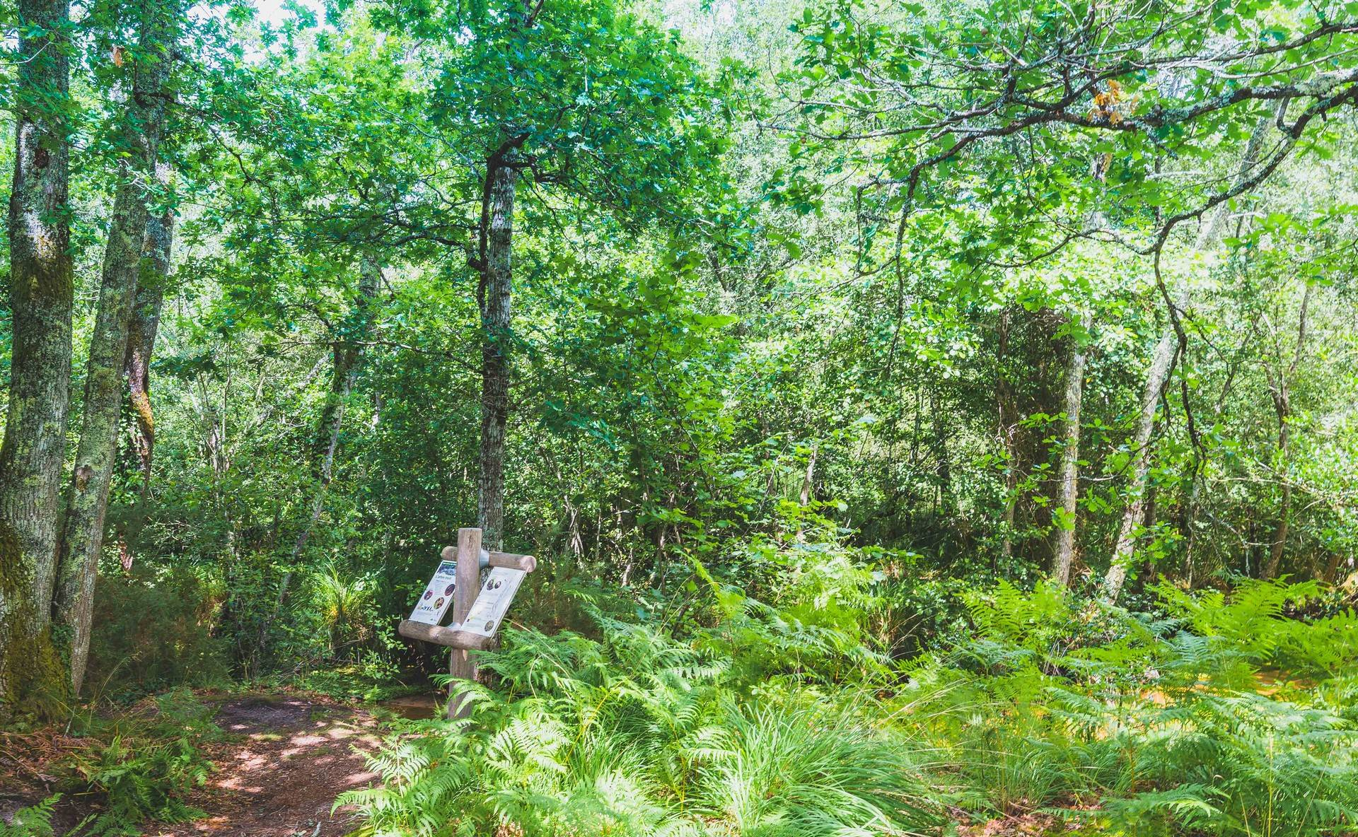 Photo 1: Une balade à l'arboretum d'Ychoux