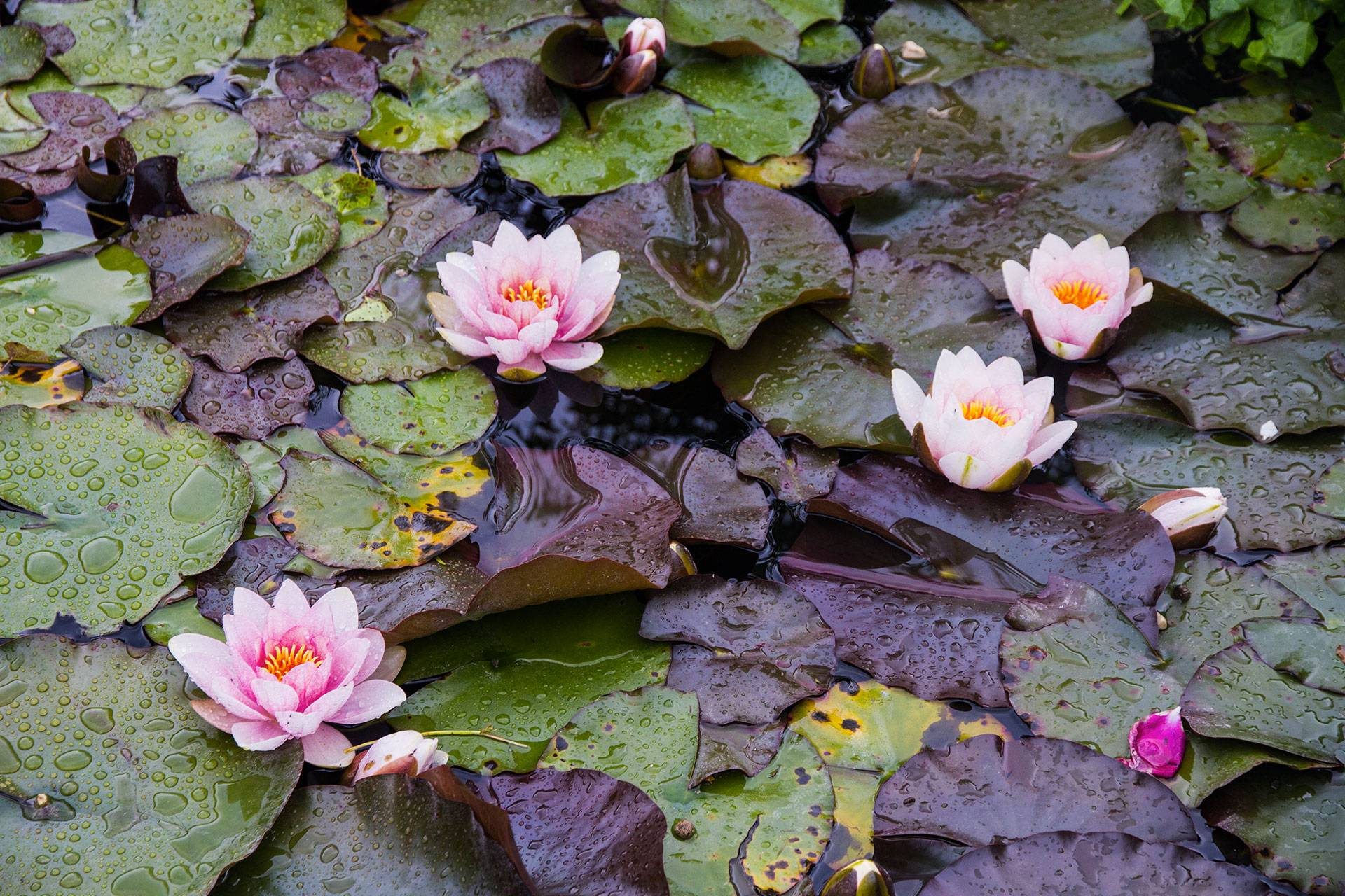 Photo 3: Florence - Le jardin des roses