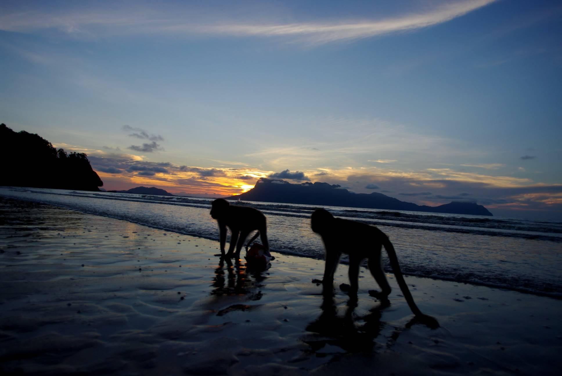 Photo 2: Trek dans l'ile sauvage de Bako
