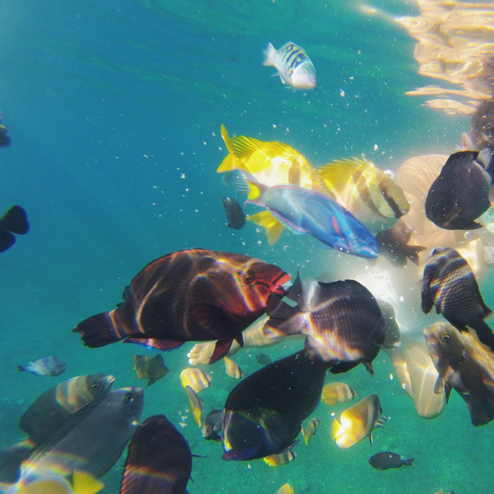 Photo 3: Amed (Bali) / l'idéal pour des passionées du snorkeling