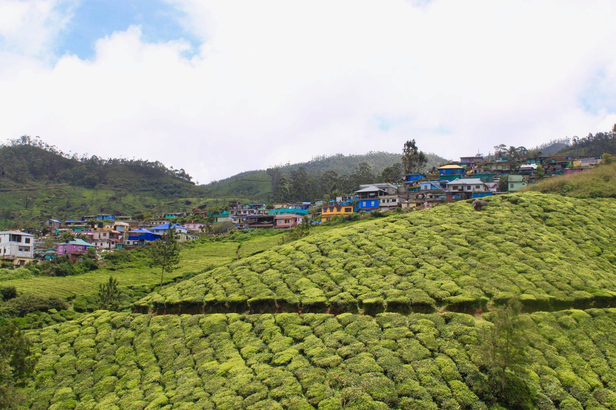 Photo 3: Plantations de thé à Munnar