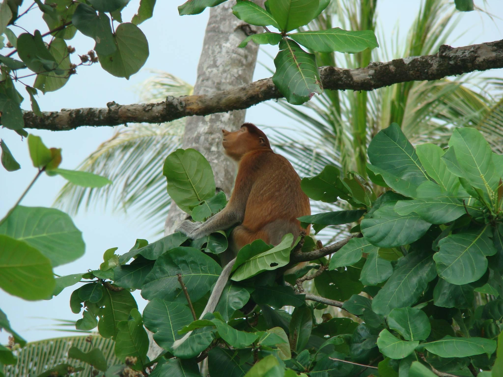 Photo 1: Bako, un joyau à Borneo