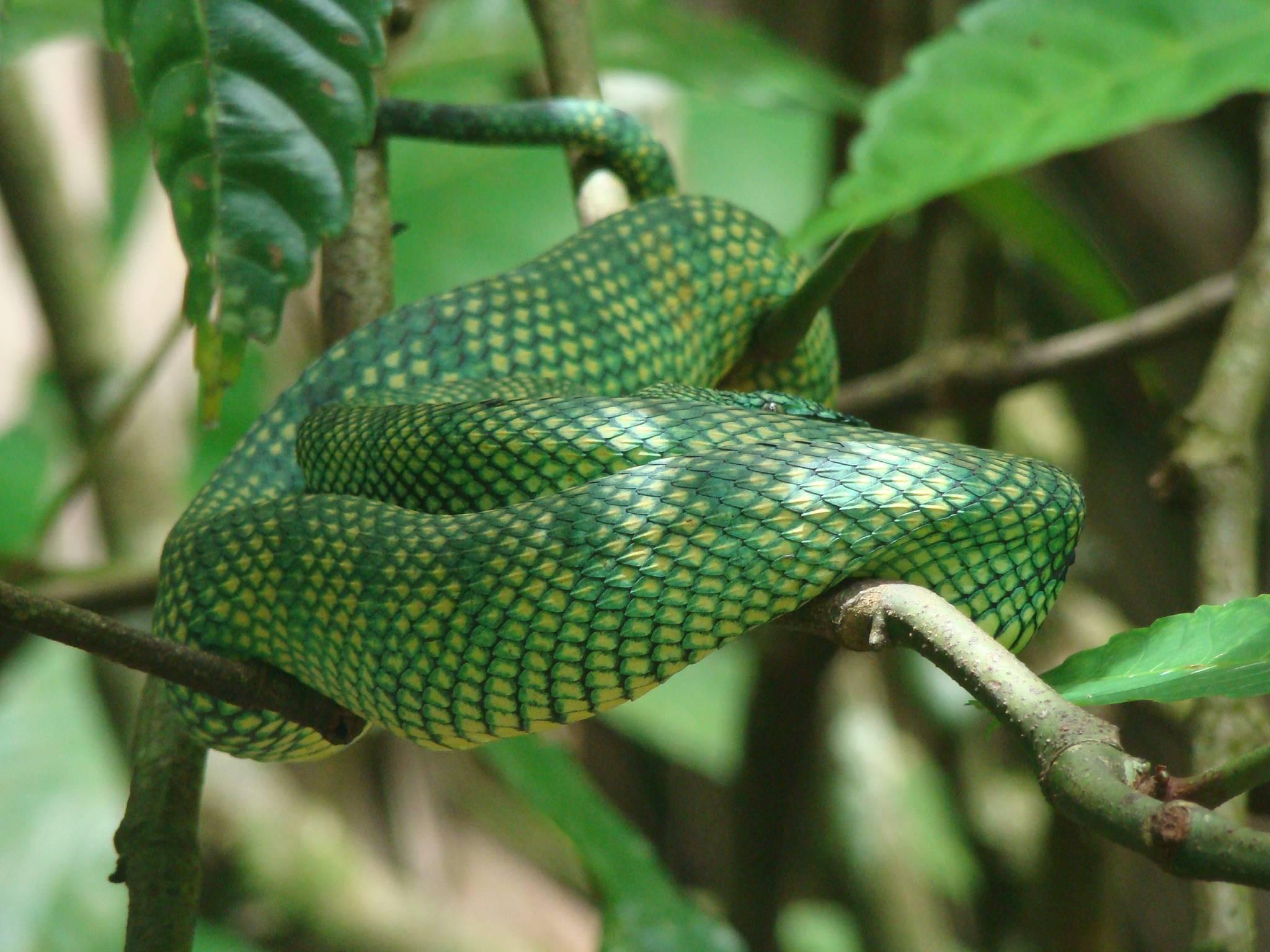 Photo 2: Bako, un joyau à Borneo