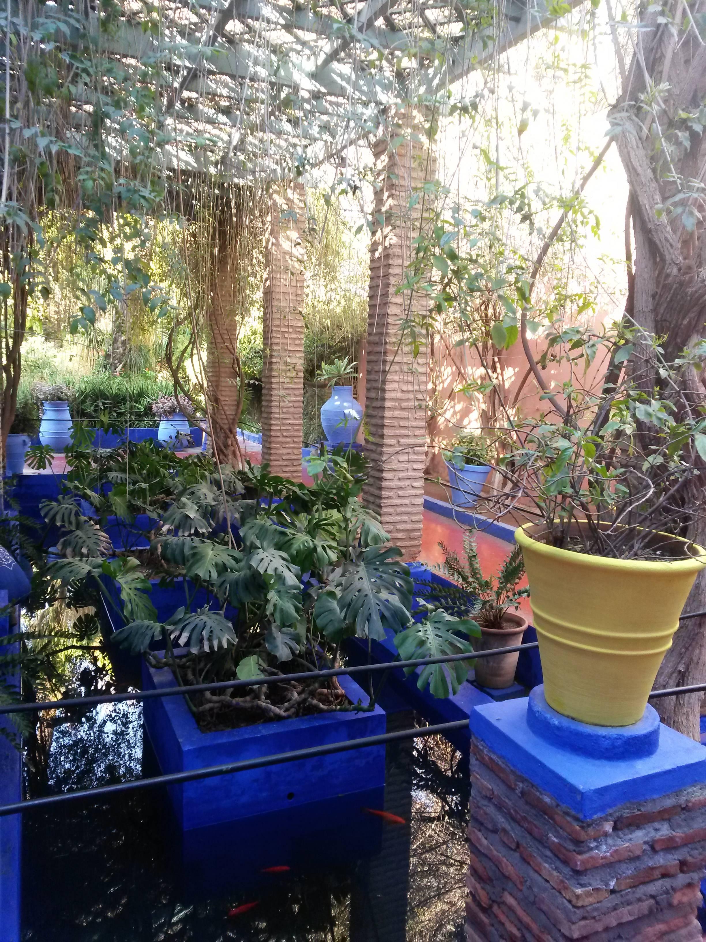 Photo 3: Le jardin Majorelle en amoureux