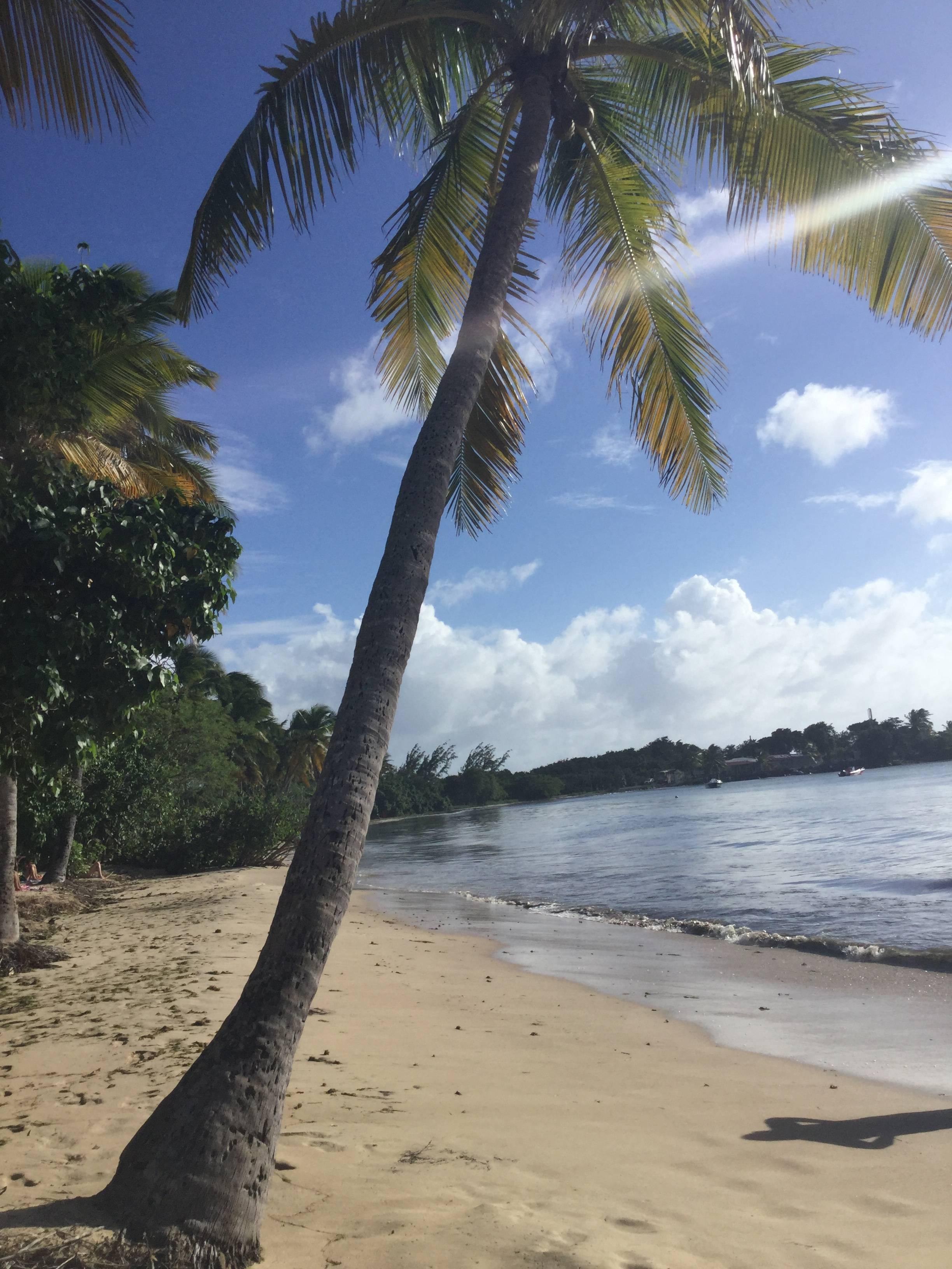 "Photo 1: Sainte Luce Martinique restaurant ""chiche"""