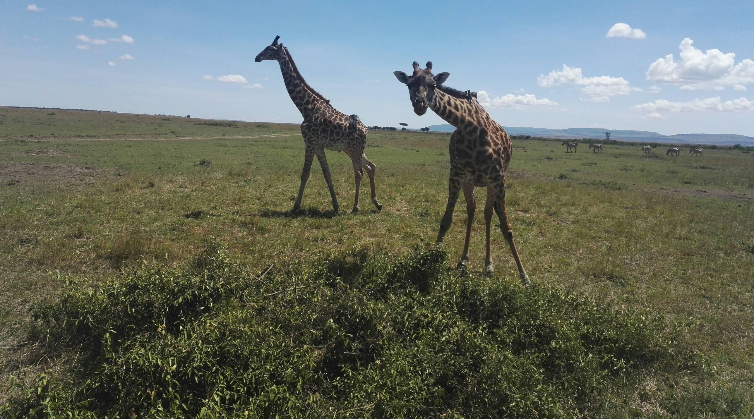 Photo 2: Parc national serengeti