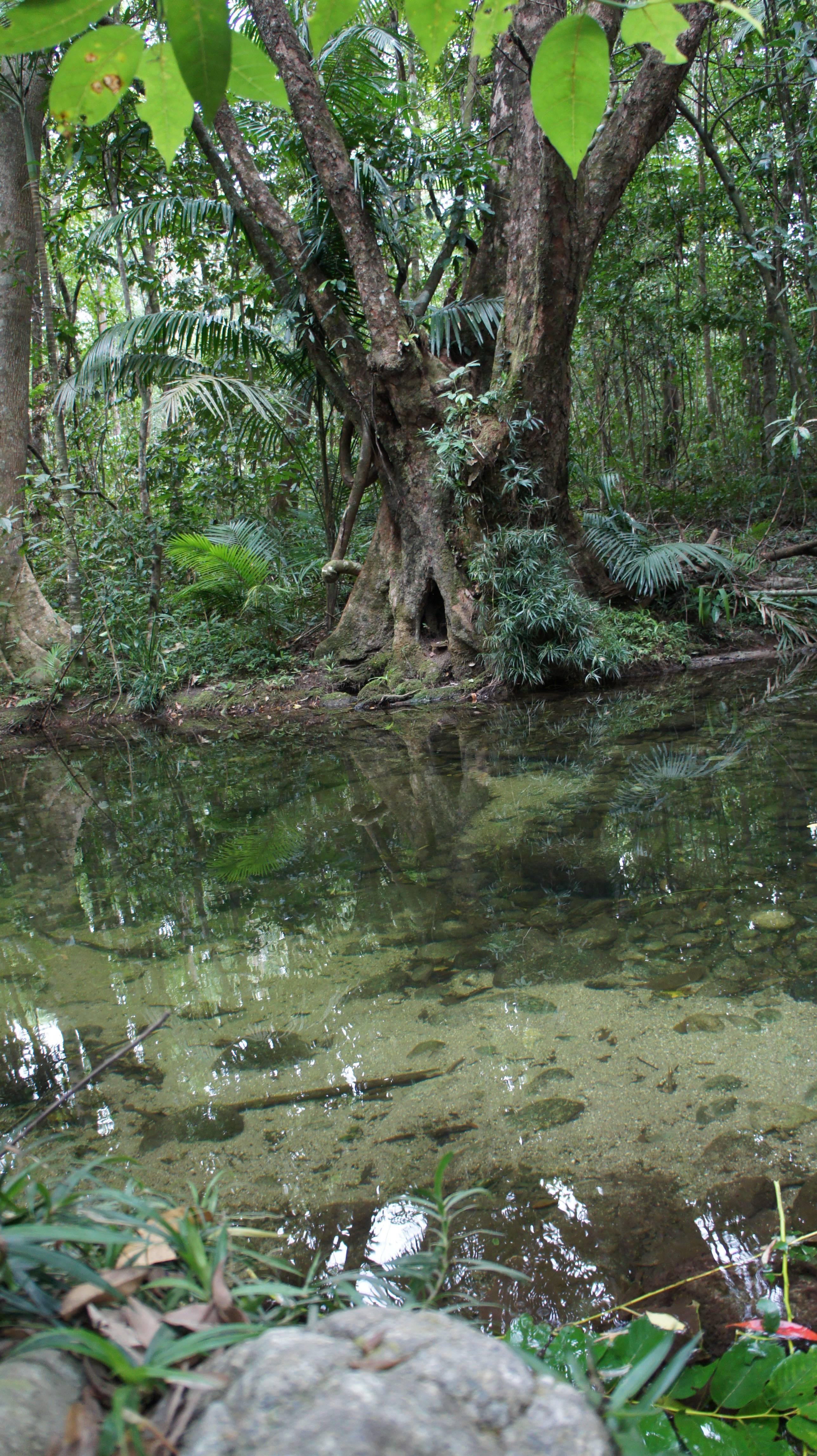 Photo 2: Daintree Rainforest: rencontre avec les Esprits de la forêt