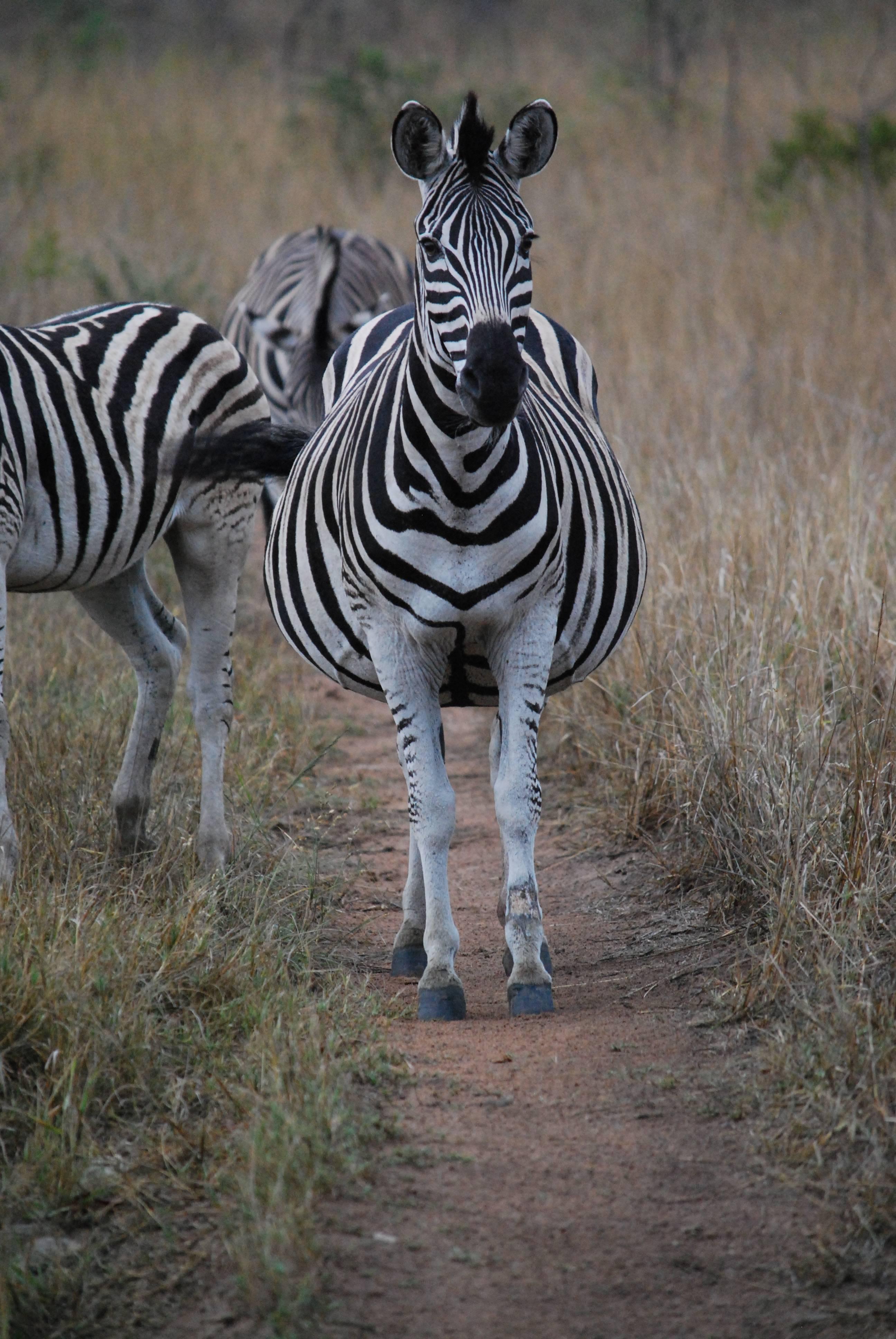 Photo 2: Hluhluwe-Umfolozi, un sublime parc d'Afrique du Sud