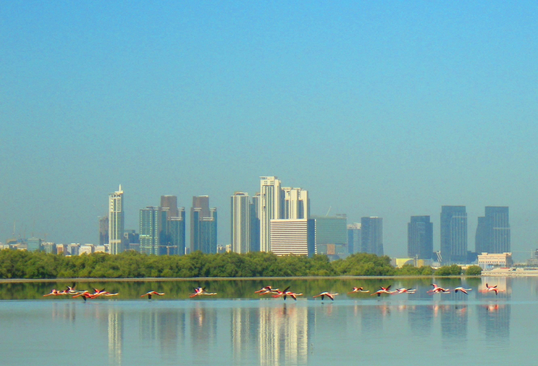 Photo 2: La Mangroove d'Abu Dhabi!! Exceptionnelle