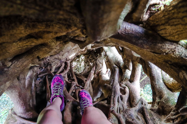 Photo 3: Grimper sur un Ficus - Monteverde - Canopy