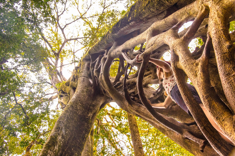 Photo 2: Grimper sur un Ficus - Monteverde - Canopy