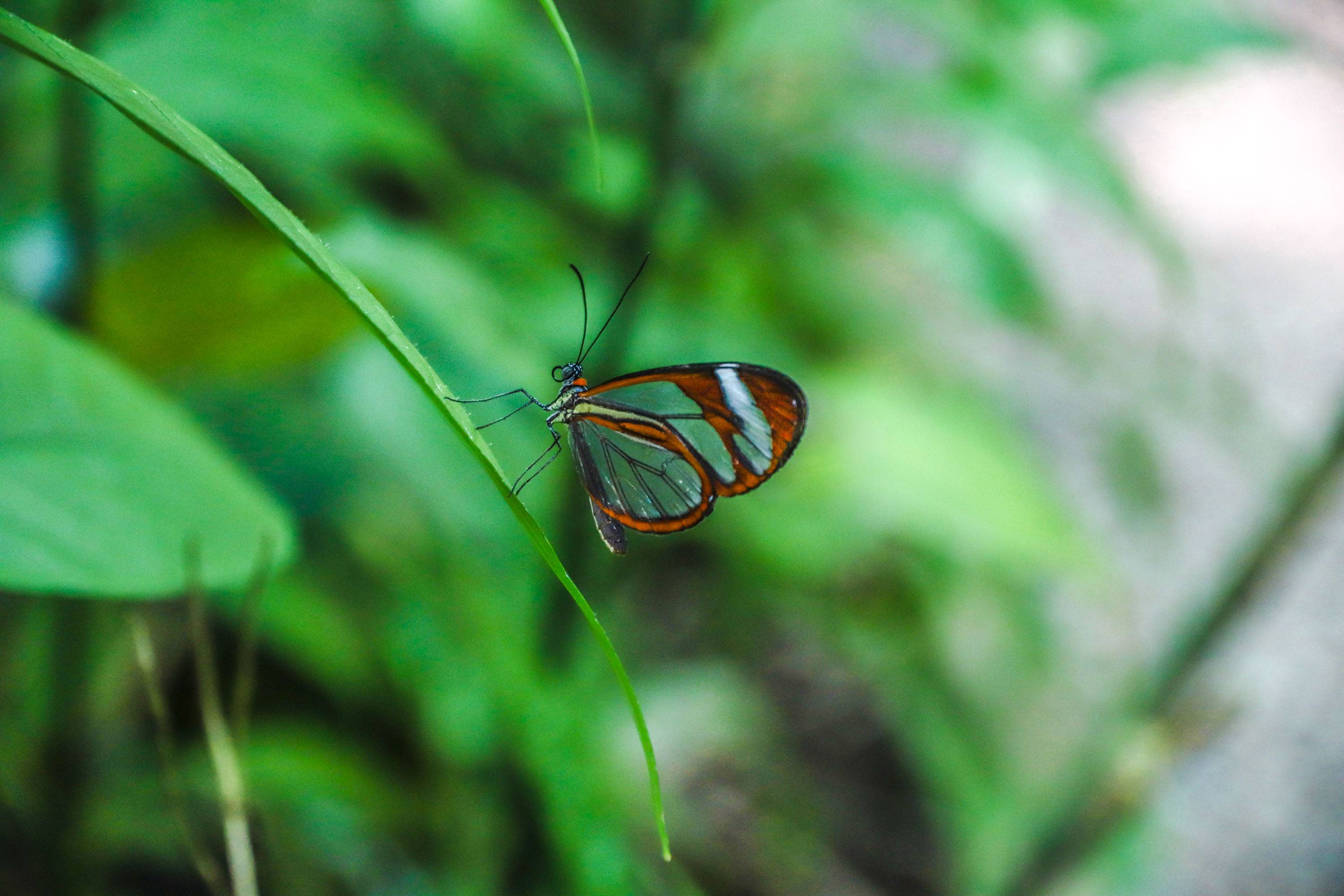 Photo 2: Butterfly garden - Monteverde