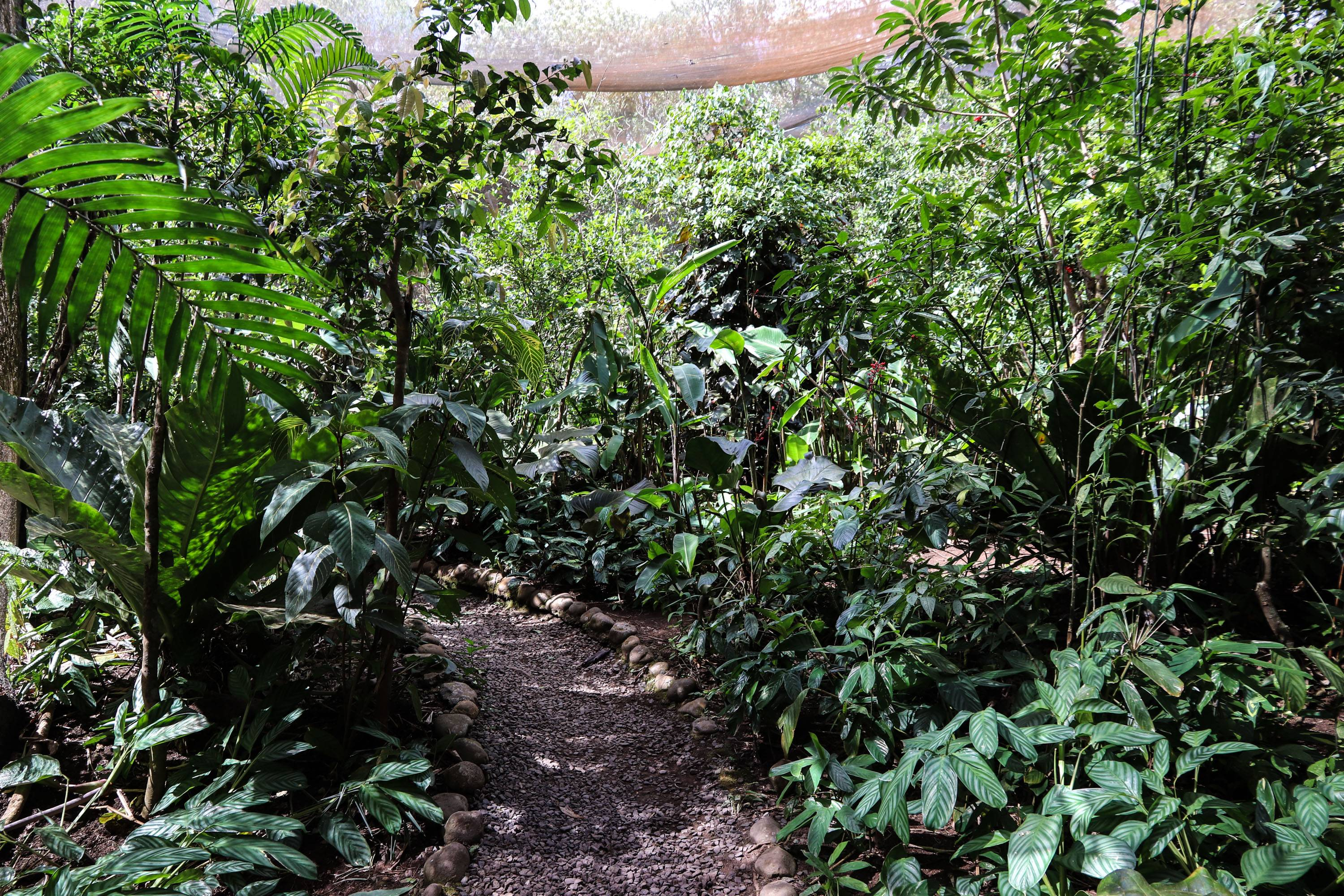 Photo 3: Butterfly garden - Monteverde