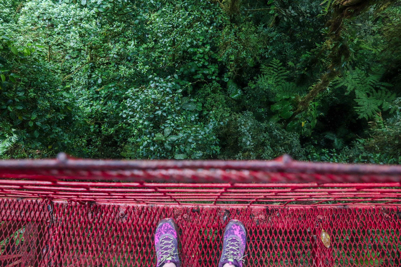 Photo 2: Cloud Forest - Monteverde