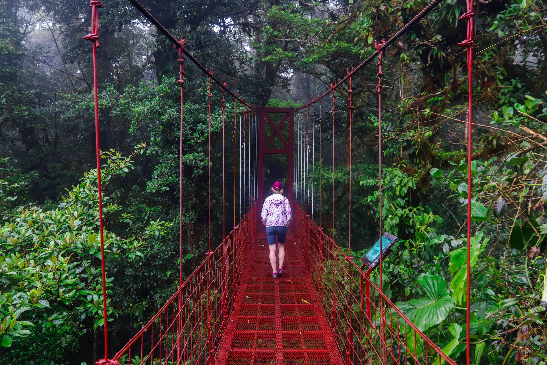 Photo 3: Cloud Forest - Monteverde