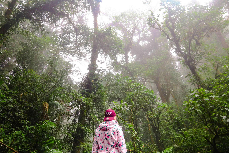 Photo 1: Cloud Forest - Monteverde