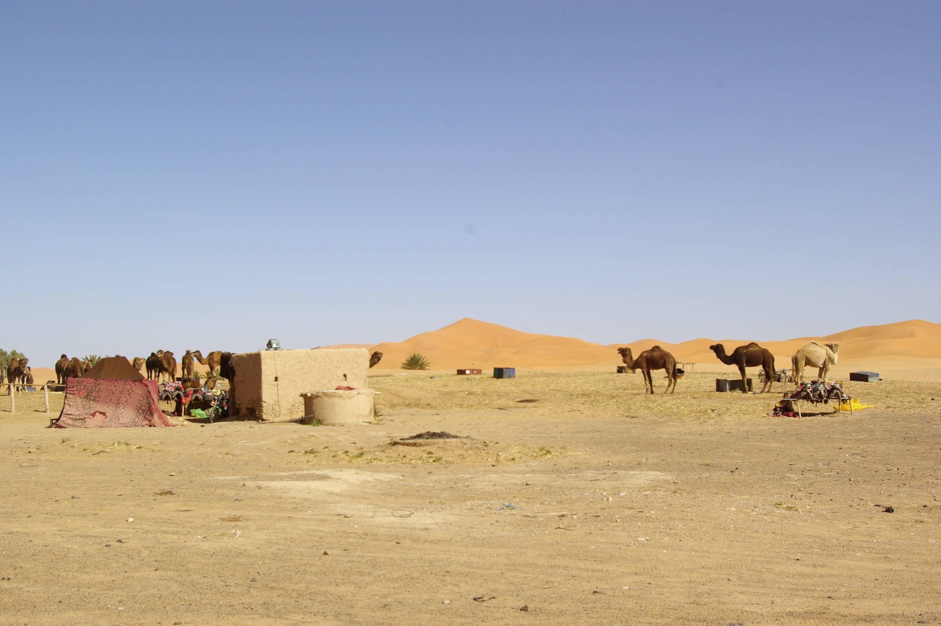 Photo 3: Merzouga, ses dunes et ses dromadaires