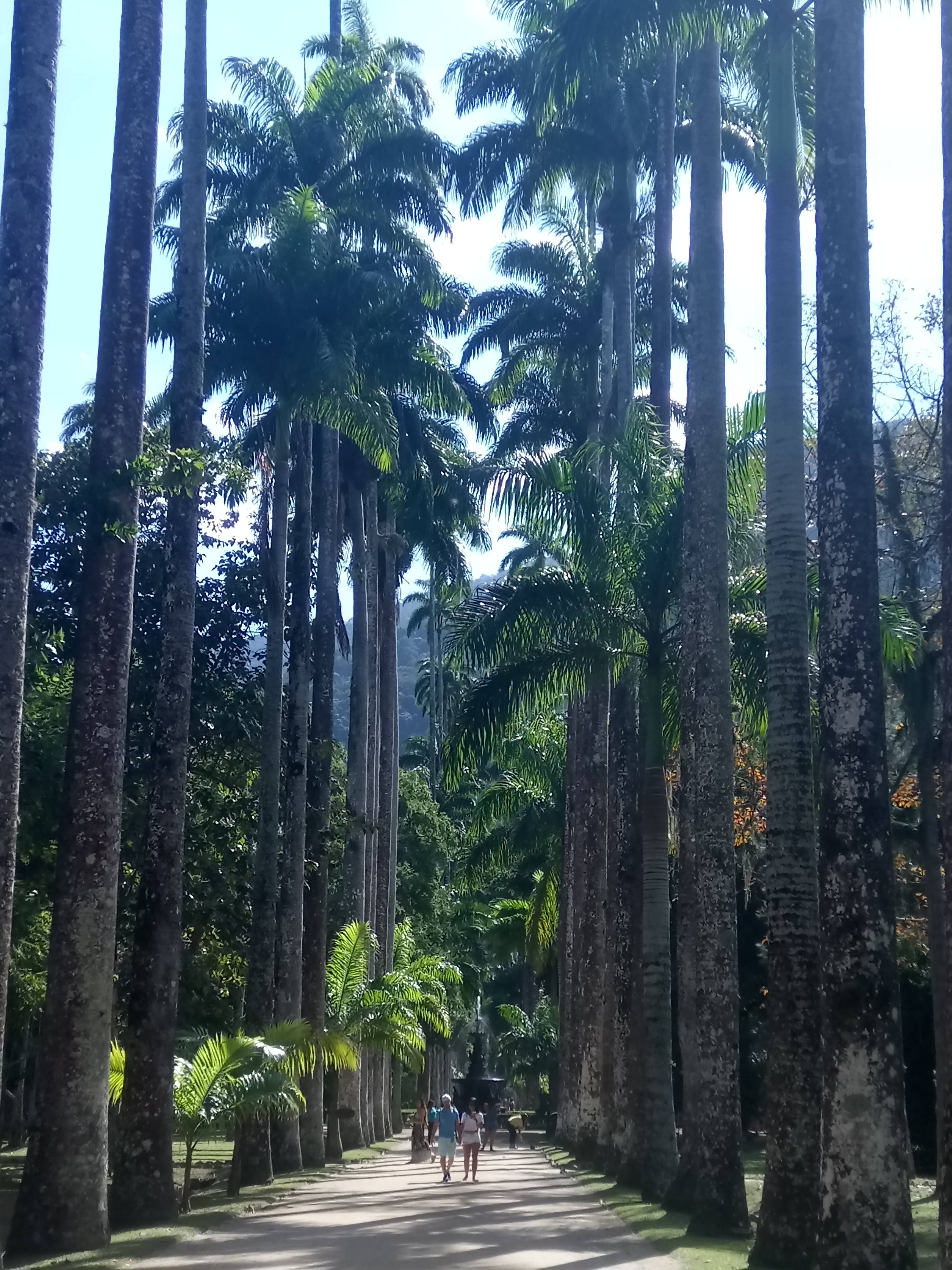 Photo 2: La jungle de Rio