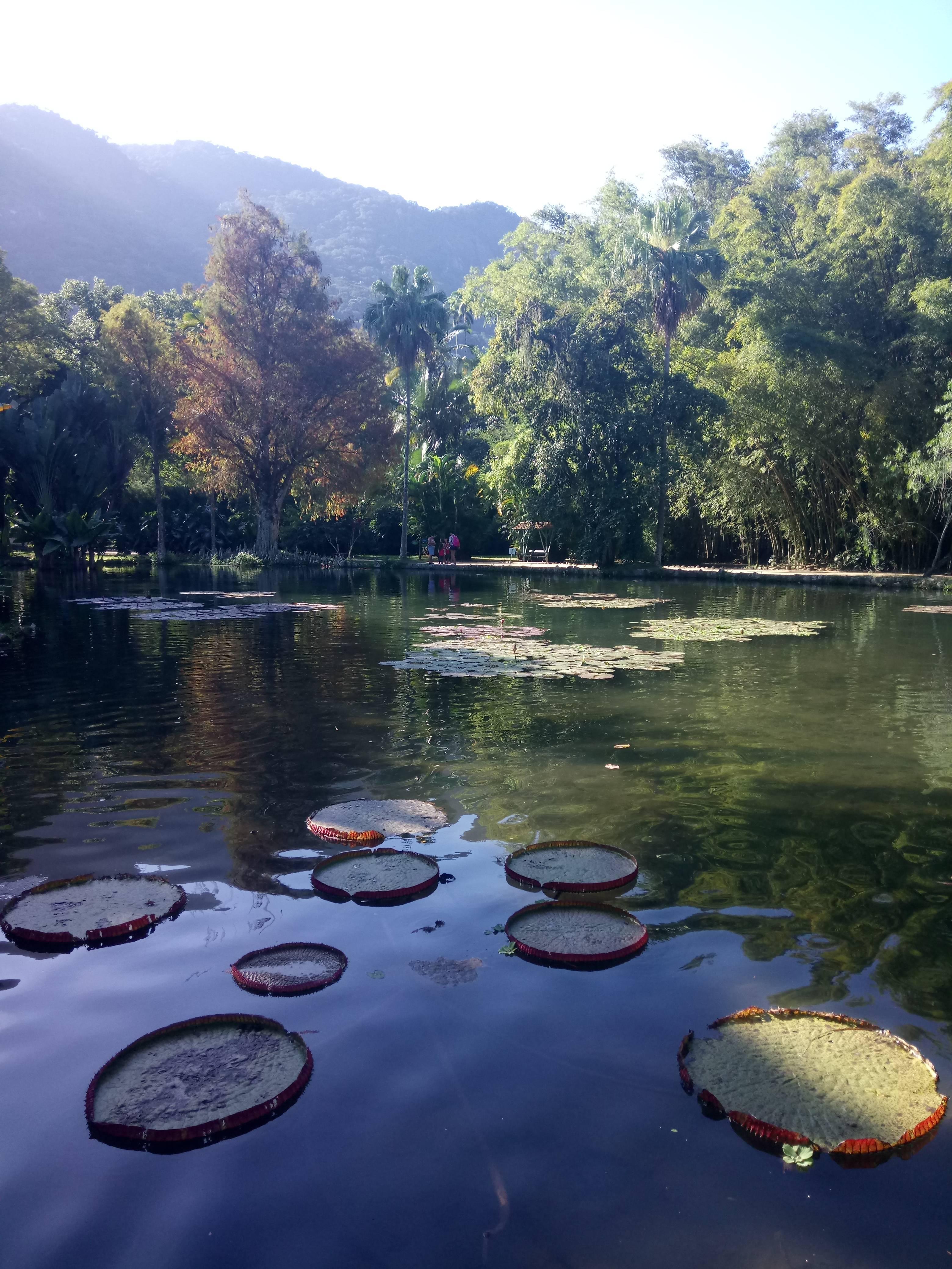 Photo 1: La jungle de Rio
