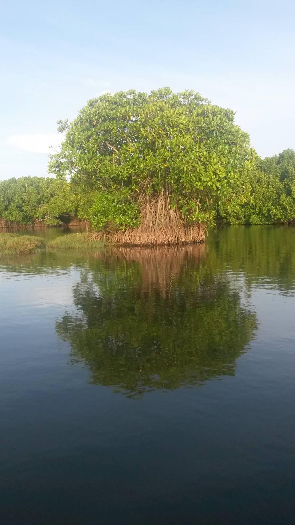 Photo 2: Un ballade dans la Mangrove