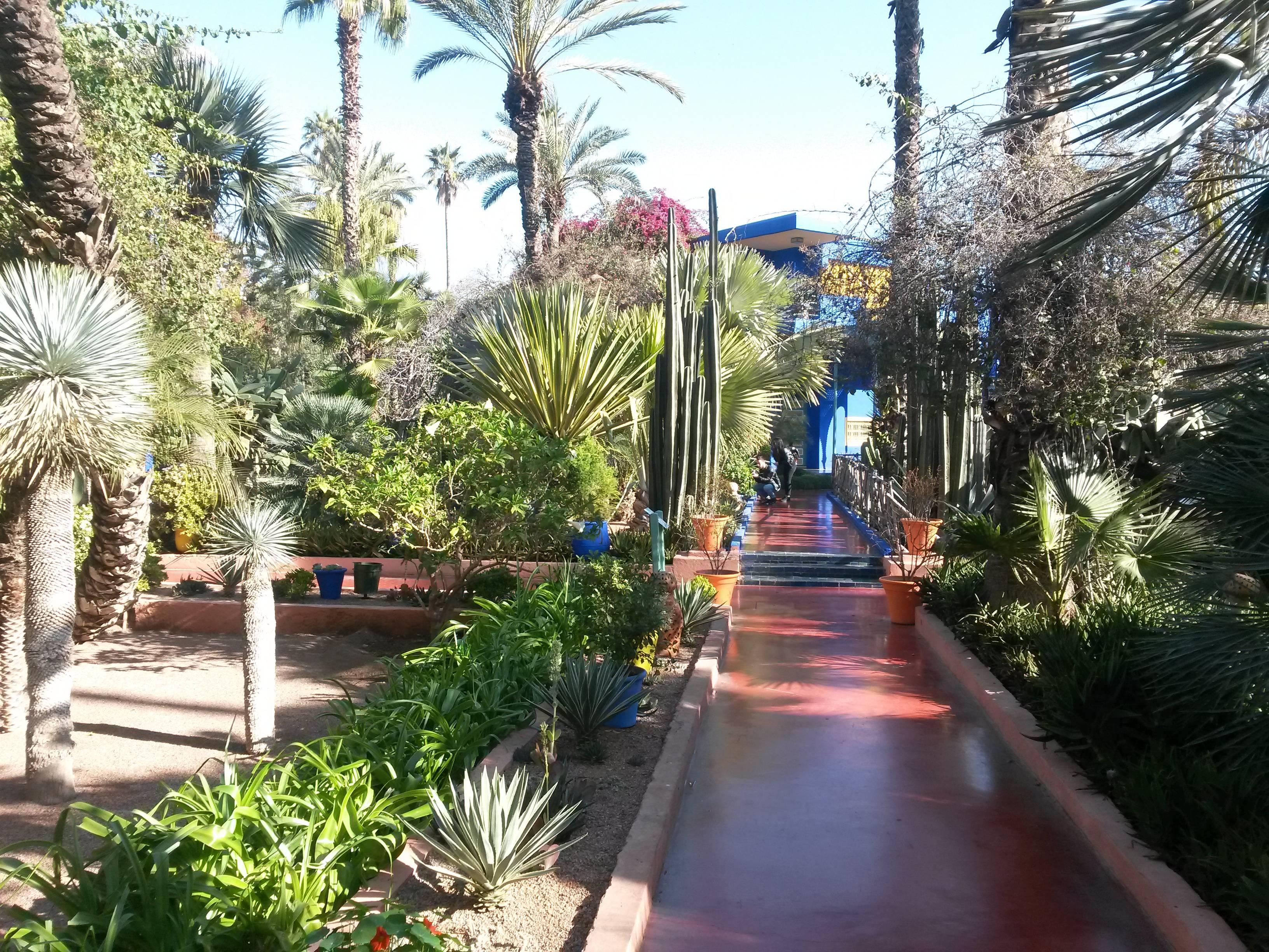 Photo 2: Le jardin Majorelle en amoureux